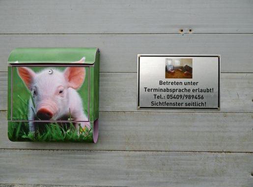 Wer Schweine hat