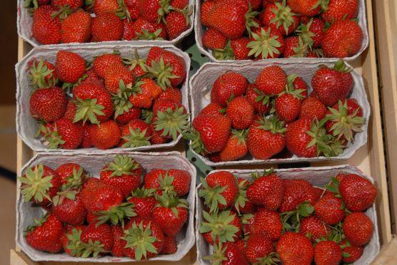 Pflanzenschutz: Rückstände in Lebensmittel kaum ein Thema - Foto: landpixel