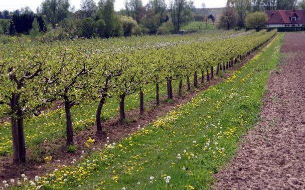 Rechtssicherheit für Obstbauern - Foto: landpixel