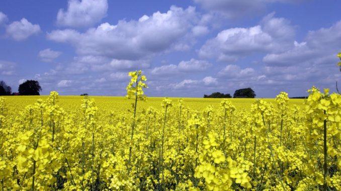 Biokraftstoffwirtschaft in Sorge - Foto: lanpixel