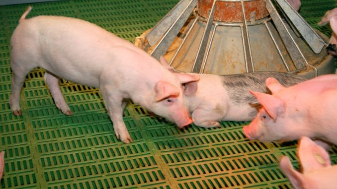 NRW will über den Bundesrat Tierschutz verschärfen - Erneute Verschärfung der Haltungsbedingungen?