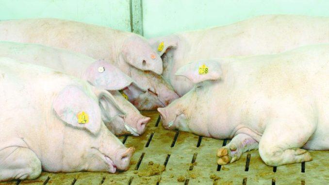 Den Tierschutz positiv vermarkten - Foto: Zwickhuber/agrarfoto.vom