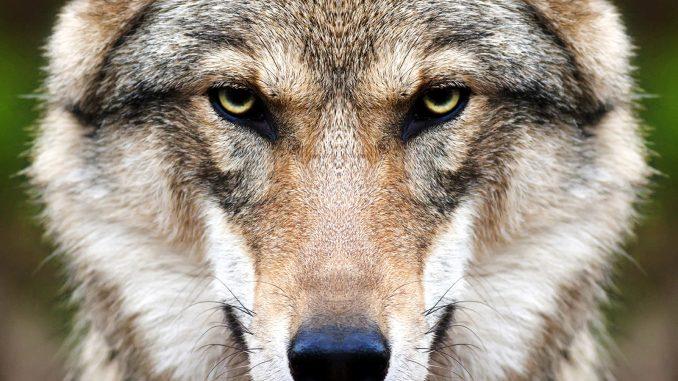 Lex Wolf verabschiedet
