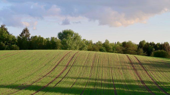 Landwirtschaftliche Fläche im Frühling