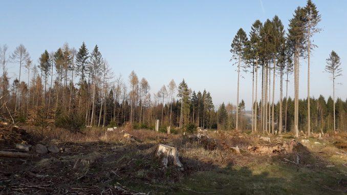 Wald in Niedersachsen