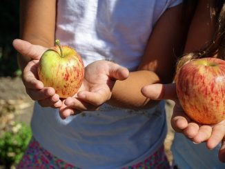 Obst in Kinderhänden