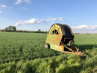 Beregung im Getreidefeld