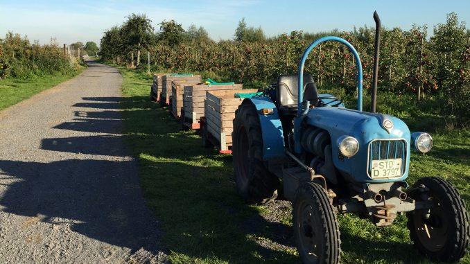 Apfelernte in der Apfelplantage
