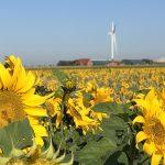 Grundsteuer Sonnenblume