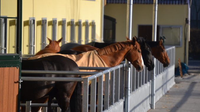 Pferdebosen