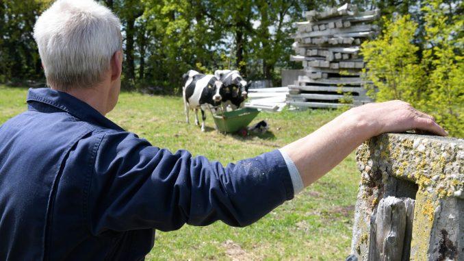 Landwirt blickt auf eine Kuh