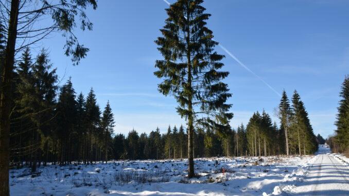 Winter im Solling
