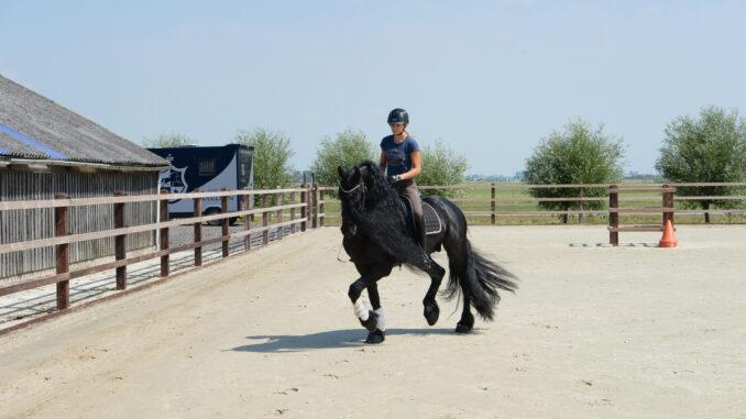 Reiterin, Pferd, Reitplatz