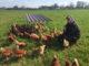 Gorden Gosch. Für den Landwirt aus der Region Hannover