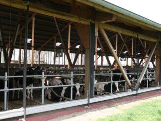 Ventilatoren im offenen Kuhstall